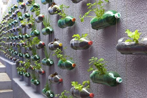 Vertical garden with recycled bottles